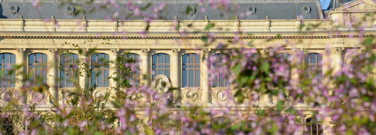 Jardin des Plantes avec, au fond, la Grande Galerie de l'Évolution © MNHN - Catherine Ficaja