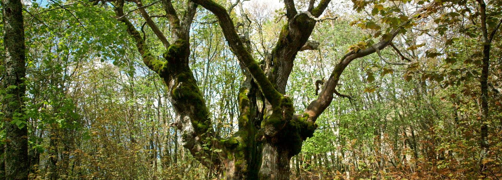Le temps des forêts, de François-Xavier Drouet