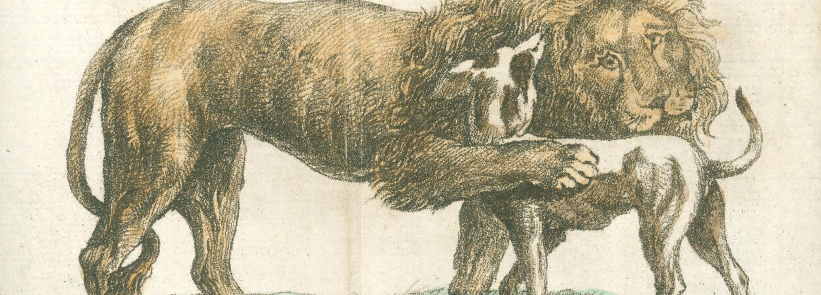 Woira le lion et son chien, 1794-1796 © MNHN - Bibliothèque centrale