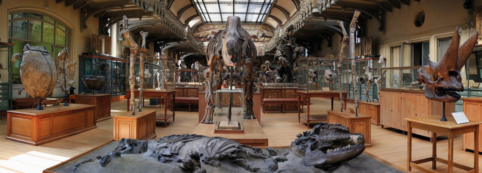 Galerie de Paléontologie © MNHN – Catherine Ficaja