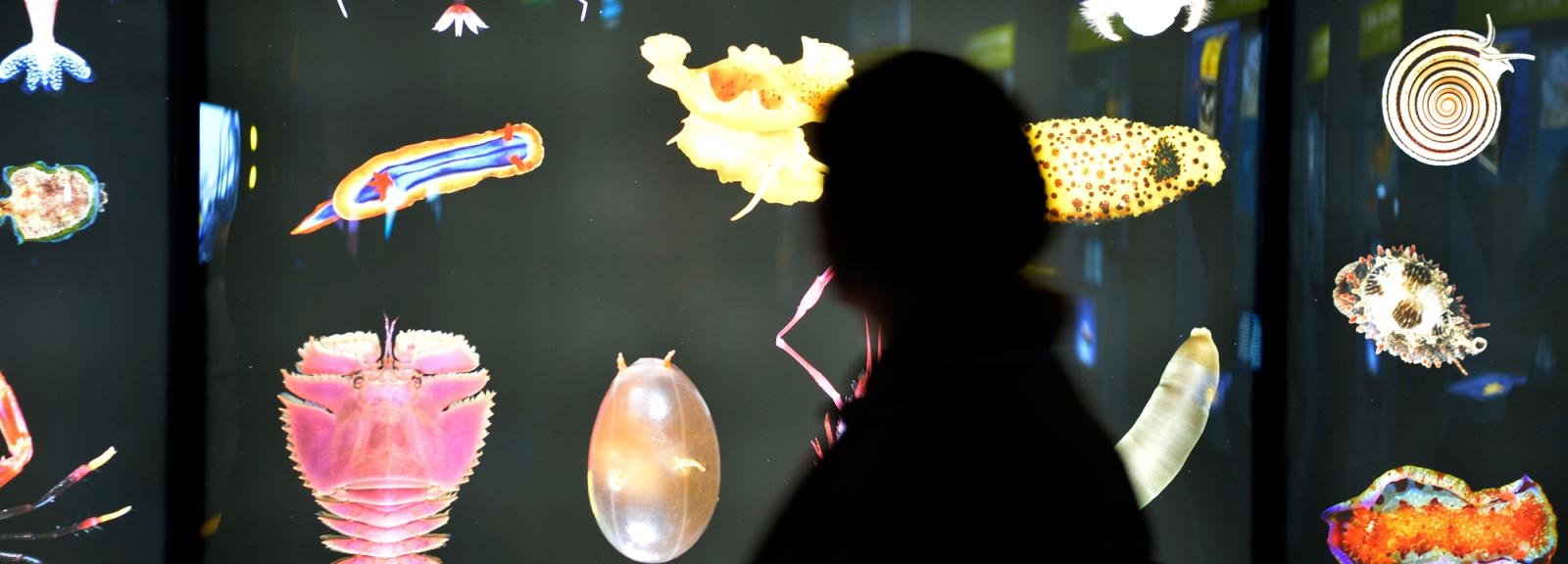 Exposition Océan, une plongée insolite © MNHN - JC Domenech