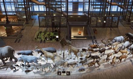 Grande Galerie de l'Évolution © Jacques Vekemans