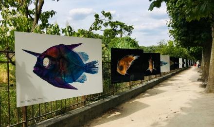Les petits des poissons - perspective de l'exposition © MNHN - L. Ternynck