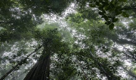 La canopée de la forêt tropicale © Mardi8 - Expéditions Spectacles - MNHN