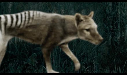 Week-end documentaire animalier © Vergine Keaton