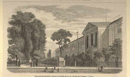 Exterior view of the Galerie de Minéralogie in 1855 - Engraving from the Journal L'illustration