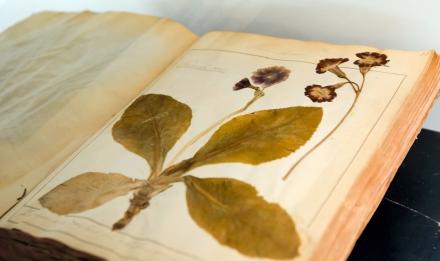 Galerie de botanique © MNHN - JC Domenech