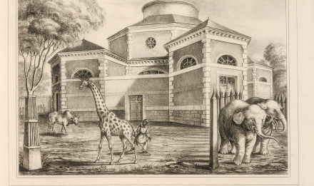 The giraffe and elephant rotunda © MNHN - Bibliothèque centrale