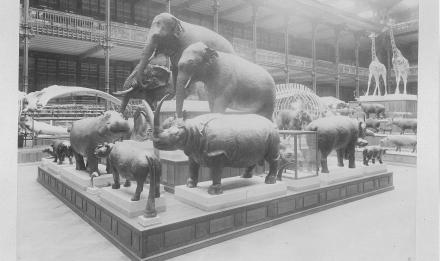 Galerie de Zoologie in 1892, hall, Groups of Pachyderms - Pierre Petit © MNHN - Direction des Bibliothèques
