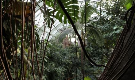 Serre des forêts tropicales humides © Manuel Cohen