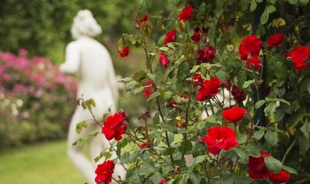 Jardin de roses et de roches © MNHN - Patrick Lafaite