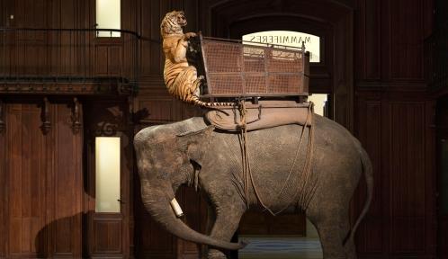 La tigresse et l'éléphante du Duc d'Orléans © MNHN - B. Faye