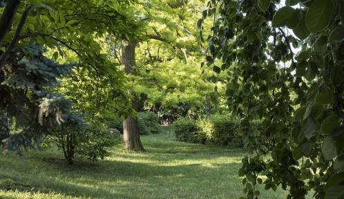 Le Cyprès chauve du Jardin des Plantes © MNHN - Agnès Iatzoura