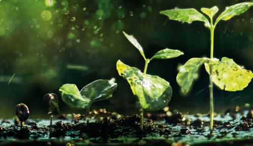 Détail affiche fête de la nature © RachenArt - Jaromlr C. - Subbotlna A. - HTU - Shutterstock.com