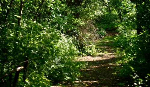 Jardin écologique © MNHN - F.-G. Grandin