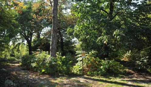 Jardin des plantes - Jardin écologique © MNHN - F-G Grandin