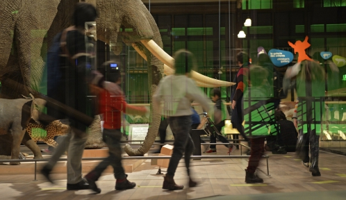 Médiation dans la Grande Galerie de l'Evolution © MNHN - J.C Domenech
