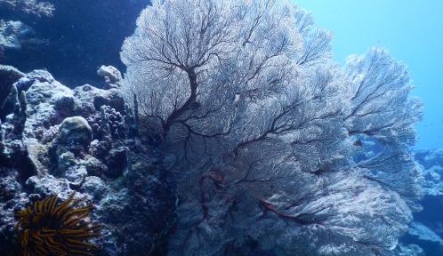 """Exposition photos """"La mer arc-en-ciel : une plongée au cœur des récifs coralliens de France et d'Israël"""" - © MNHN - P. Joannot"""