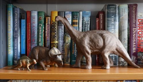 Détail de la bibliothèque Gaudry de la galerie de Paléontologie © Eric Sander