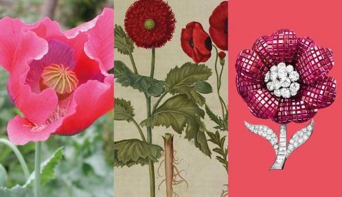 Calendrier floral – Août : le pavot © MNHN / Collection Van Cleef & Arpels