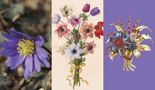 Calendrier floral – Avril : les anémones © MNHN / Collection Van Cleef & Arpels