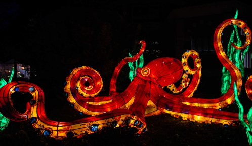 Océan en voie d'illumination © MNHN - F-G. Grandin