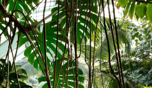 Les Grandes Serres du Jardin des Plantes © MNHN - Manuel Cohen