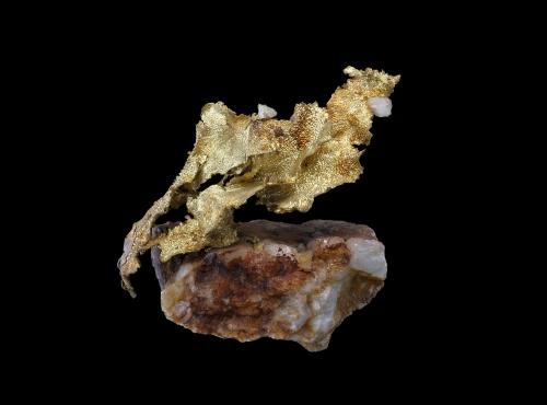 Or natif jaune de forme lamellaire sur un gangue de Quartz compact (N° 155.64) © MNHN - Louis-Dominique Bayle