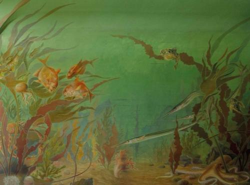 Algues, L. Le Gall & D. Lamy, illustration de couverture © Ed. Delachaux & Niestlé-Muséum