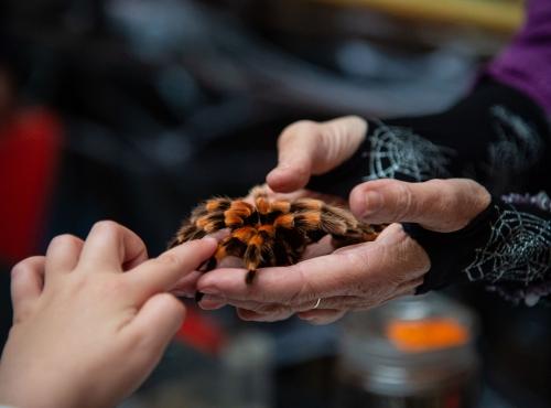 Une araignée pas si effrayante © MNHN - F-G. Grandin