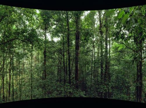 Forêt tropicale © Mardi8 / Expéditions Spectacles / MNHN