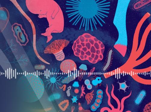 """Podcast """"Chroniques de notre planète"""" - Illustration : Notre ancêtre, Clémence Pollet © Muséum national d'Histoire naturelle / The Parisianer, 2021"""