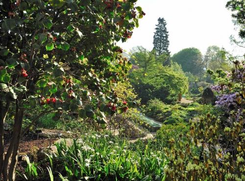 Jardin des plantes - Jardin alpin © MNHN - F.-G. Grandin