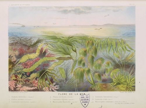 Parcours algues Alfred Moquin-Tandon, Le monde de la mer, ill. de Riocreux, 1866 © MNHN
