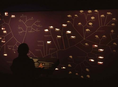 Exposition Pas si bête ! 1000 cerveaux, 1000 mondes © MNHN - Bernard Faye