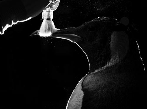 Entretien des collections - Petit matin en Grande Galerie de l'Évolution - Manchot empereur © MNHN - A. Iatzoura