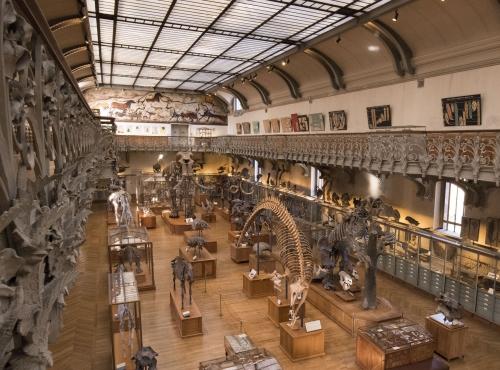 Galerie de Paléontologie © MNHN – Agnès Iatzoura