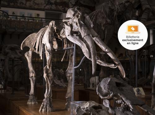 Archaeobelodon filholi, mastodonte © MNHN – Agnès Iatzoura