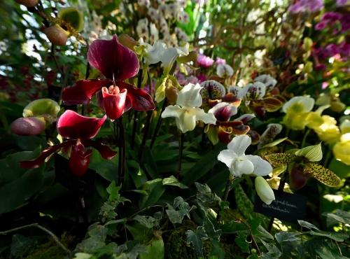 Mille & une orchidées | Galeries, Jardins, Zoo - Jardin des ...