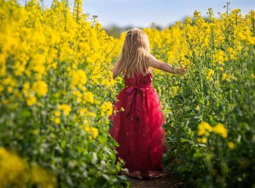 Petite fille dans un champ de colza © Sven Lachmann / Pixabay