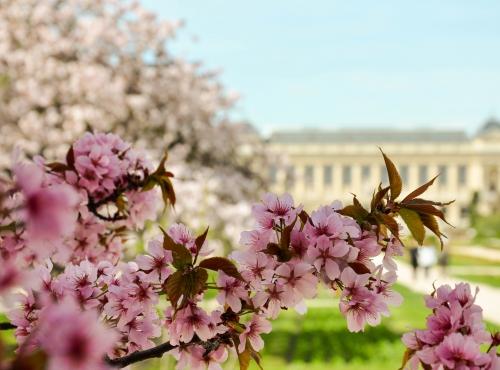 Jardin des Plantes © Catherine Ficaja