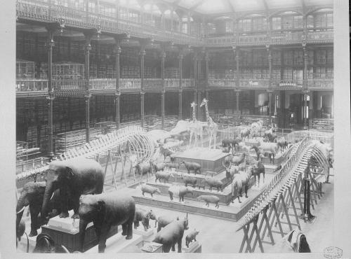 Galerie de Zoologie. Vue d'ensemble du grand hall, 1890 - Coll. du Muséum national d'Histoire naturelle © Pierre Petit