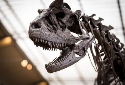 Carnotaurus sastrei © MNHN - Agnès Iatzoura