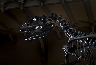 Allosaurus © MNHN - Agnès Iatzoura