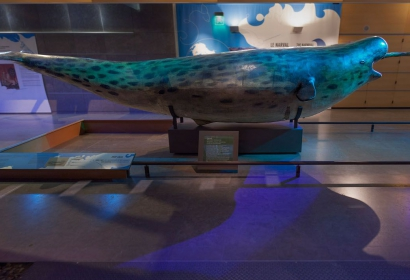 Espace Narval, Grande Galerie de l'Évolution © MNHN - B. Faye