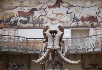 Squelette du Mammouth de Durfort vu de face © MNHN - P. Lafaite