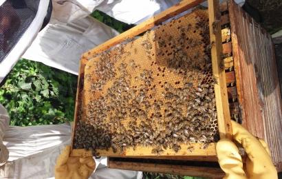 Propos des jardiniers, initiation à l'apiculture © MNHN - M. Tourolle