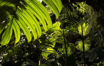 Serre des forêts tropicales humides © MNHN - Agnès Iatzoura