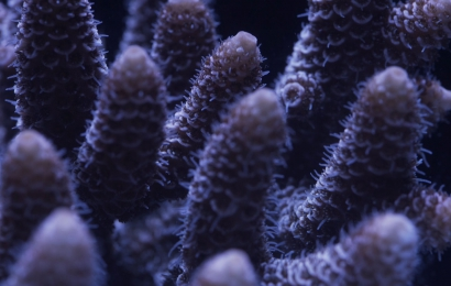 For the love of corals, film © Sonia Levy