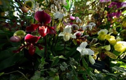 Mille & une Orchidées © MNHN - F-G. Grandin
